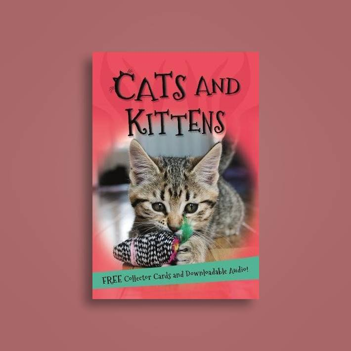 It's all about    Cats and Kittens - Kingfisher Near Me   NearSt