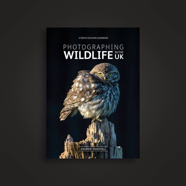 Best place for wildlife photography near me