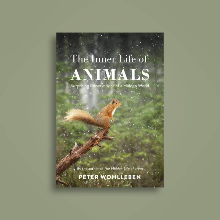 The Inner Life of Animals: Surprising Observations of a Hidden World