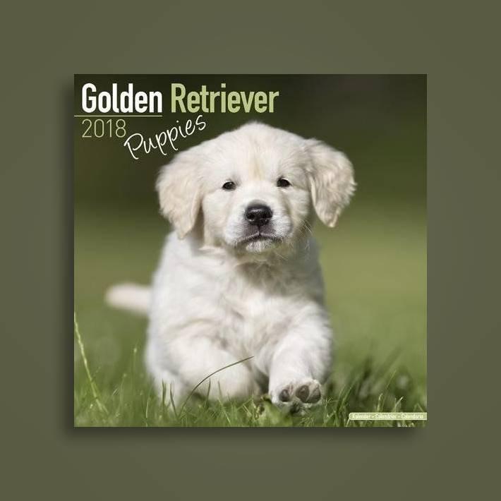 Golden Retriever Puppies Calendar 2018 - Avonside Publishing Ltd Near Me |  NearSt